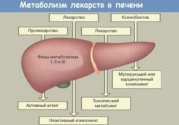 Токсические воздействия на печень